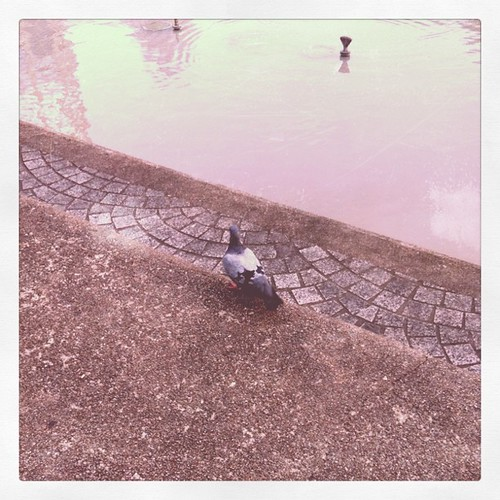 Lonely pigeon ;)