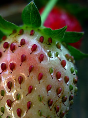 Strawberry#22_Copy (Single-Tooth Productions) Tags: red greenleaves white macro green nature fruit canon strawberry dof strawberries ps depthoffield pointshoot strawberrycloseup canonpowershotsd880is unrippedstrawberry