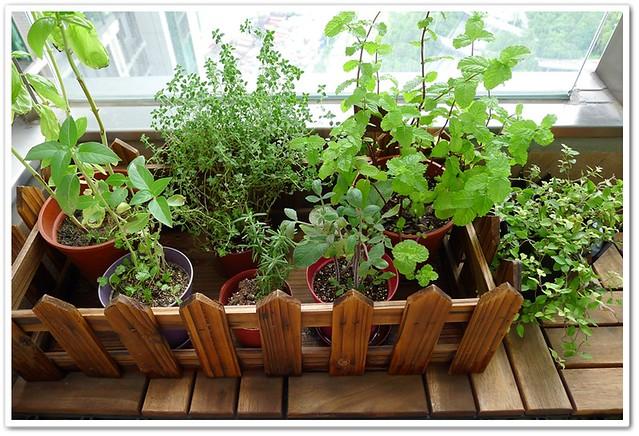 "Herbs ""Garden"""