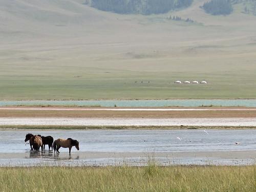 Horses + gers on salt lake