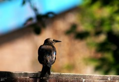 Waiting (nEoPOL) Tags: colour bird nikon dof neopol d80 ringexcellence