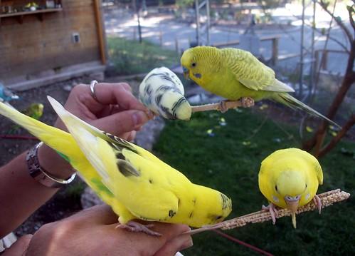 Birds_9510n