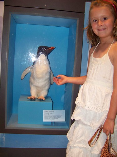 C6 with Penguin