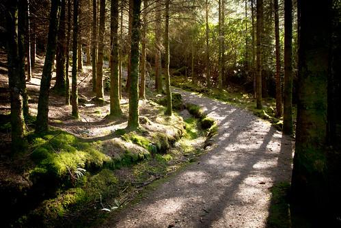 IMG_4776 - Glencoe Lochan Trails