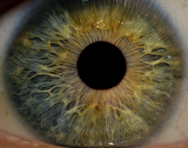 Alex's Eye Macro - Iris Detail