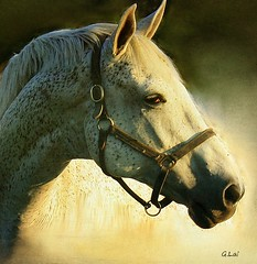 Enjoy the Summer (G.LAI) Tags: life light summer horse art nature beauty sunshine animal closeup photoshop painting photography image farm live prince sensational legend horsehead whitehorse portriat bestcapturesaoi magicunicornverybest magicunicornmasterpiece