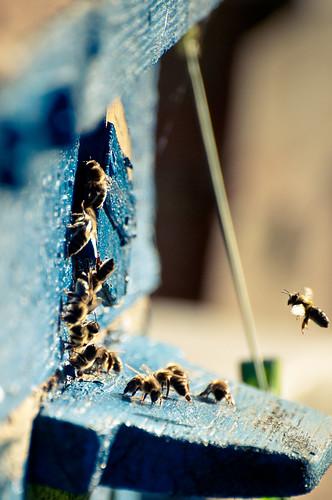 bees by Valentyn Chub