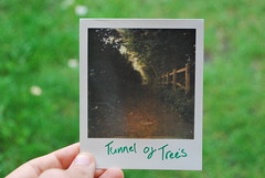 tunnel of trees (Ben Wolfarth) Tags: old trees portrait colour green film nature vintage fence project polaroid photography path first tunnel shade 600 instant p sharpie analogue flush 680 impossible impulse px px680