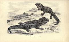 Anglų lietuvių žodynas. Žodis sphenodon punctatum reiškia <li>sphenodon punctatum</li> lietuviškai.