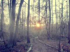 Winter woods. (Chloe Hague.) Tags: trees winter sunset sun mist fog woods logs loughborough