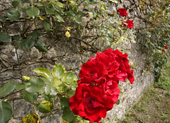 CASTLE WALL (Adam Swaine) Tags: county uk flowers trees red roses england green english beautiful rural canon countryside kent flora village britain villages east tonbridge 1740mm counties naturelovers 2011 thisphotorocks ilroseto adamswaine wwwadamswainecouk