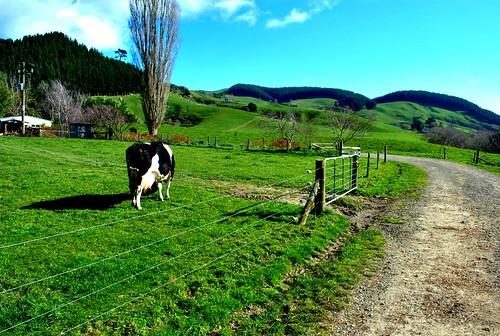 NZ_farm_8