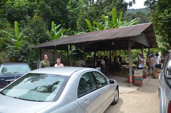 balik pulau durian (0.1)