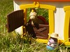 saddle up! (CracklinTulip) Tags: horse vintage play western weebles