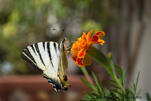 Butterfly effect!