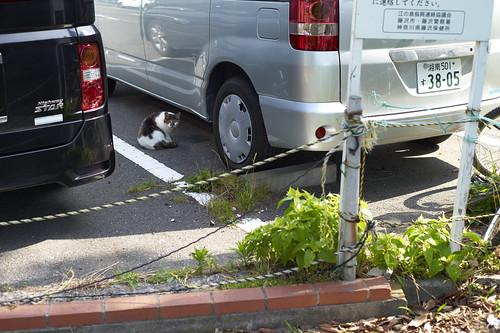 at a parking