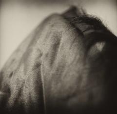 Borderlands (Zeb Andrews) Tags: horse mountain film lines animal oregon hair square muscle curves pacificnorthwest kodaktrix toned gem mane oregoncity hasselblad500c bluemooncamera animalscape zebandrewsphotography