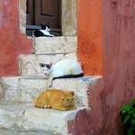 Monemvasia (single gate), three cats siesta on the steps, shhhhh.......