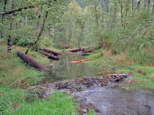 After - an improvement of water quality and fish habitat for streams such as Oregon's Sucker Creek.