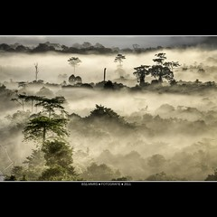 Malaysia: Emerging tree tops [Explored] (Bas Lammers) Tags: sun mist tree fog forest sunrise canon miri jungle malaysia layers mulu 50d