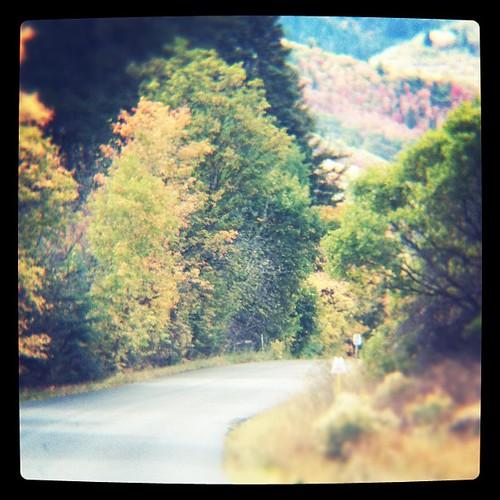 Fall leaves. Pretty.