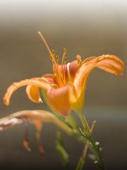 (Nephelim (www.nerobizzarro.com)) Tags: flower village wildlife details dettagli fiori borgo castellucciodinorcia floraefauna vallodelnera