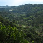 "View from don Eduardo's Coffee Farm <a style=""margin-left:10px; font-size:0.8em;"" href=""http://www.flickr.com/photos/14315427@N00/5923768595/"" target=""_blank"">@flickr</a>"