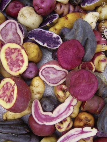Potato flesh colors – Agricultural Biodiversity Weblog