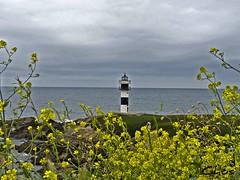Entre el mar y la flora (mukotxa) Tags: espaa flores verde azul faro mar spain galicia amarillo ribadeo islapancha oltusfotos