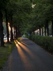 Strong light (BigWhitePelican) Tags: road morning trees sunlight finland helsinki shadows july 2011 kpyl touraroundtheworld fujifilmfinepixhs10