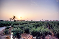 Jardins de la Mnara (cranjam) Tags: morocco marocco marrakech hdr olivegrove menara oliveto qanat menaragardens abdalmumin giardinidellamenara jardinsdelamnara