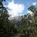 Floresta de cedros e os primeiros picos nevados