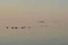 Kayak de mer sur le St-Laurent (Trois-Pistoles, Qubec) (Fransois) Tags: sea mer river twilight kayak poem haiku tide qubec stlawrence stlaurent soir crpuscule excursion stlawrenceriver troispistoles mare fleuvestlaurent pome franoischarron