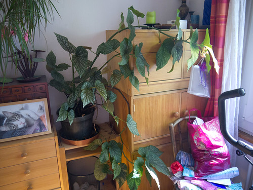 My Plants 14.jpg