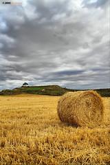 Tras la cosecha (Josepargil) Tags: cielo árbol campo cosecha paja rulo horizonte trigo rollo larioja rastrojo josepargil