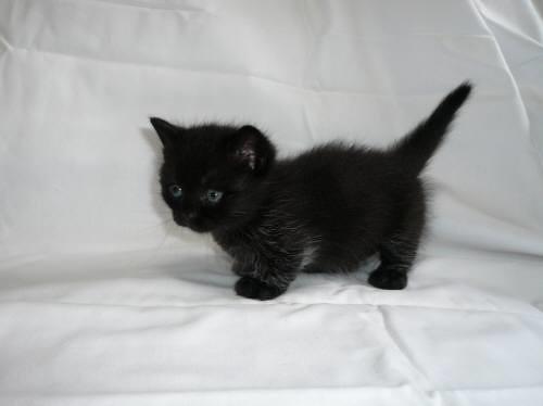 最近初めてネコ飼ったw かわええwwww