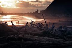 bois mort - suite (sparth) Tags: ocean wood beach silho