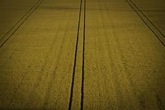 Polder (L.Y.D) Tags: summer sky zomer lucht polder zon flevoland lelystad almere graam graanvelden