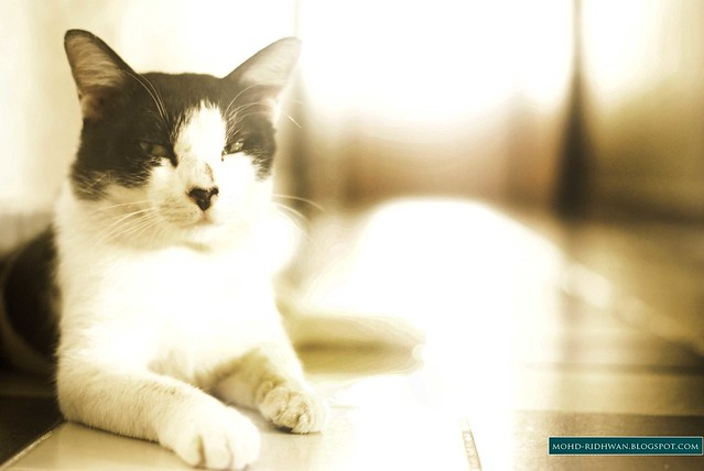 Village 4 Cat