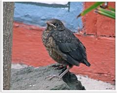 Blackbird Landing (1)