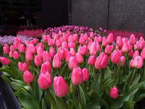銀座 ミキモトの花壇