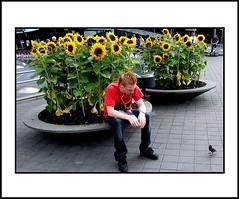 Straat (Theo Kelderman) Tags: street city holland netherlands nederland zonnebloemen schiphol stad vogel straat mensen jongen haarlemmermeer spreeuw amsterdamairport theokeldermanphotography
