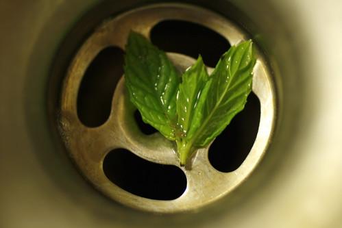 [204/365] Mint Leaves by goaliej54