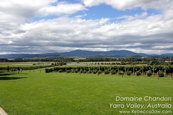 domaine chandon yarra valley australia (04)
