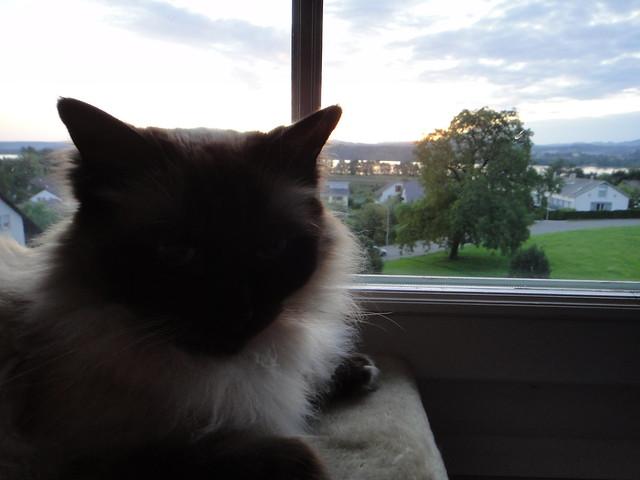 15.Jul.11 Pickle enjoying her morning sunrise