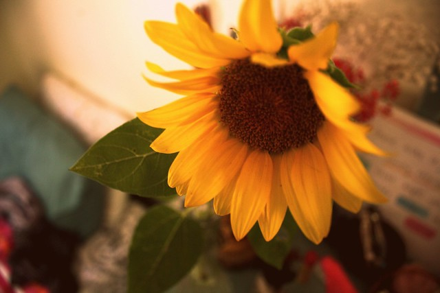 serendipitous sunflower