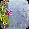 On mirror .. (Rebeca Mello) Tags: magicunicornverybest magicunicornmasterpiece sbfmasterpiece sbfgrandmaster