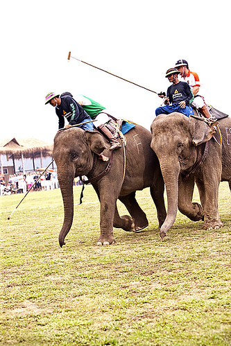 King's Cup Elephant Polo, Anantara resort