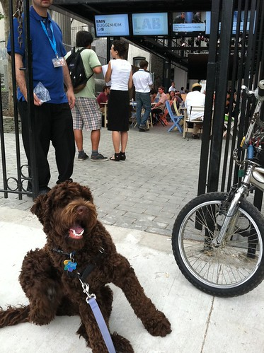 finn, no dogs at Guggenheim Lab