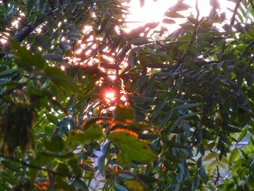 Sunset _ 4177